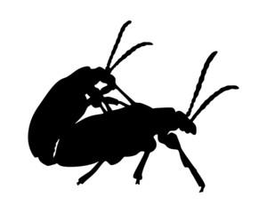 Käfer bei der Paarung