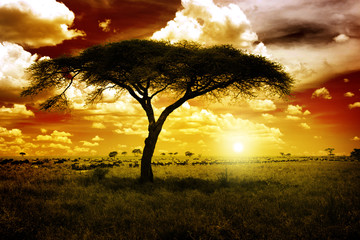 Canvas Prints Africa Africa Sunset