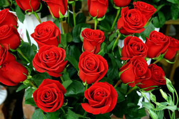 decorative beautiful bouquet of red fresh roses