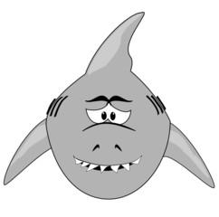 sensibler Hai