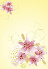 Lily pink, vector floral background