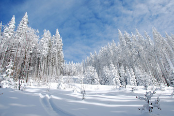 winter ski track pathway