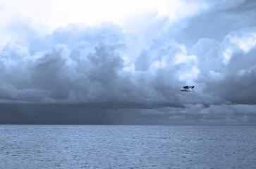 Eine Seemöve im Flug über die Ostsee