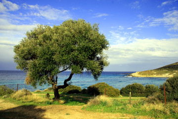Poster Oliviers olivier