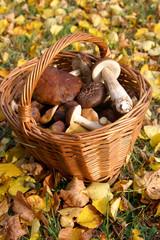 Basket of mushroom
