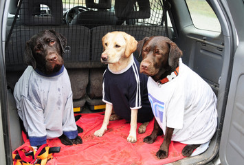 dogs in t shirts