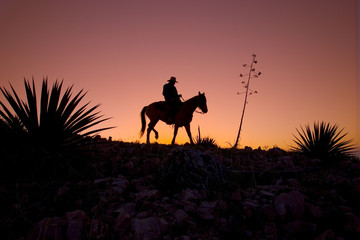 Horseback Rider At Sunset / Sunrise