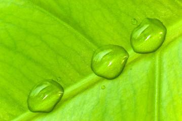 Floral Hintergrund mit Blatt und Wassertropfen 9