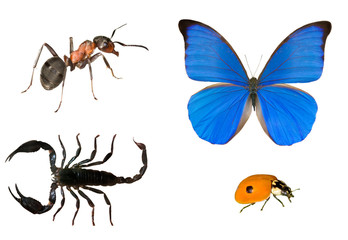 ant, butterfly, scorpion and ladybug