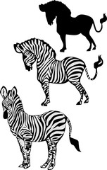 zebra collection