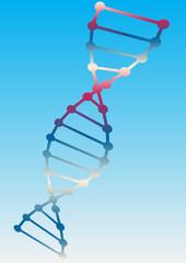 Vector of DNA model