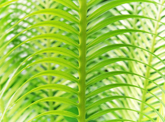 abstract pattern of tropical plant
