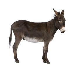 Zelfklevend Fotobehang Ezel donkey