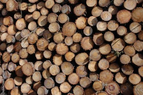 stere de bois photo libre de droits sur la banque d 39 images image 12446650. Black Bedroom Furniture Sets. Home Design Ideas
