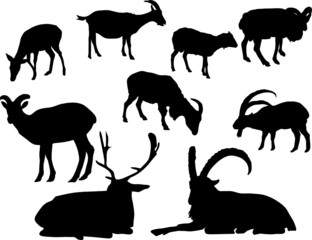silhouette of horned animal,deer and goats