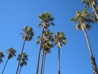 Palmen am Himmel