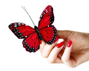 Woman's hand holding a butterfly