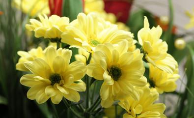 Spoed Fotobehang Macro flower