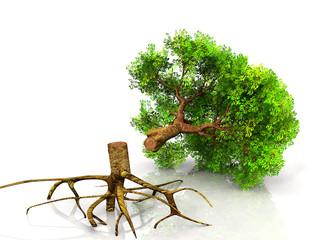 arbre coupé