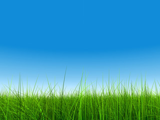 green grass over a clear blue sky without clouds as background