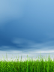 green grass over a blue sky with white clouds as background