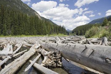Duffey Lake and Cayoosh Creek with dead Trees