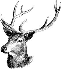 Deer illustration black and white vector