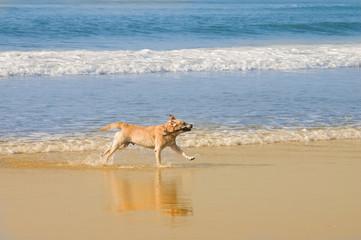 chien ramenant son bâton
