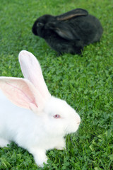 Easter bunnys on green grass