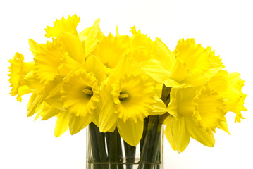 Bunch of spring daffodils in a vase on a white background