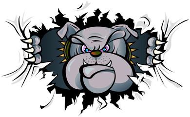 Bulldog attack