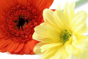 Poster de jardin Macro flower