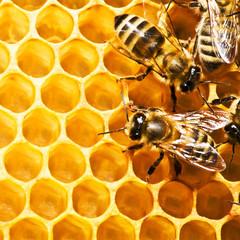 bees on honeycells