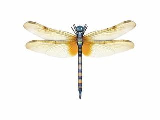 libelle von oben