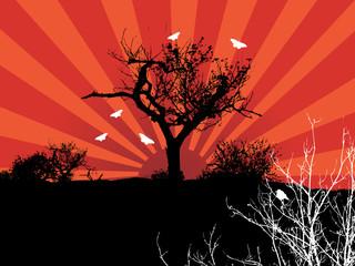 sun dawn hot graphic