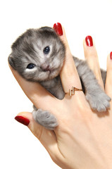 Small kitten in hands close up