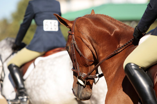 Horses and Riders Before a Horse Show