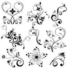 Floral vectors