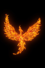 burning phoenix isolated over black background