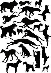 twenty black dogs
