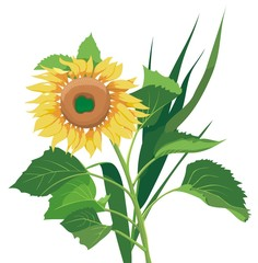 Sunflower, green leaves and other plants, vector illustration