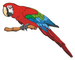 Bright colored parrot sitting on a branch, vector illustration