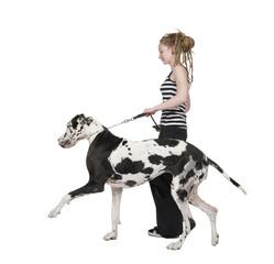 Obraz young girl walking her dog (Great dane 4 years) harlequin Great - fototapety do salonu