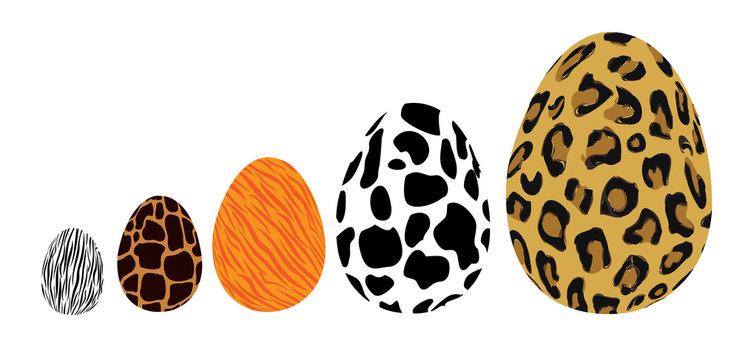 animal egg