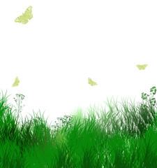 Herbes vertes et papillons sur fond blanc