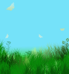 Herbes vertes et ciel bleu