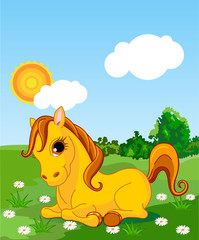 In de dag Pony Golden horse