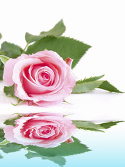 Wellness,Rose