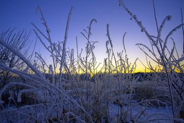 The winter sunset.