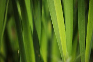 Wall Mural - Green grass background. Shallow DOF.